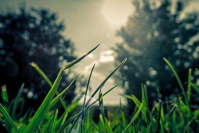 event_0005_Grass