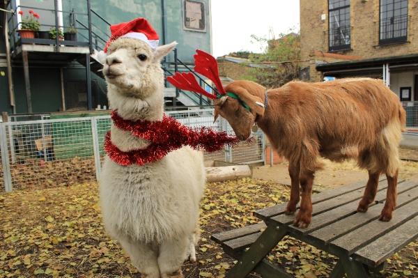 Vauxhall City Farm Christmas Family Fun Day