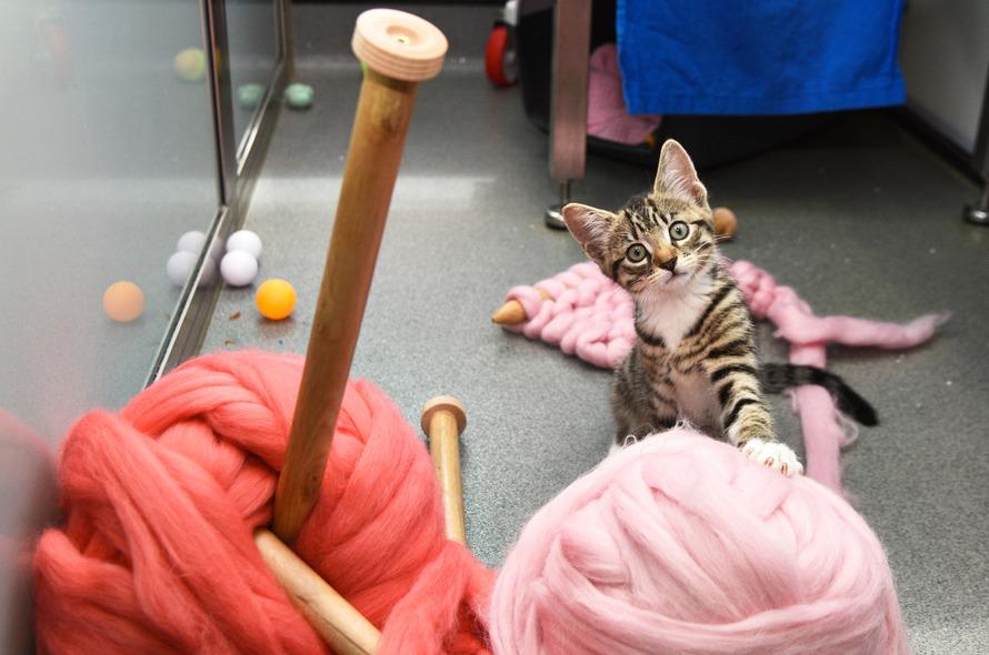 CatsKnitting