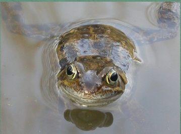 FroggyDay17 Flyer