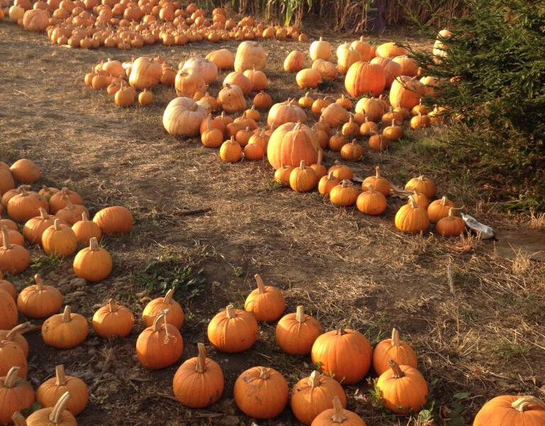 GM Family Feasts – autumn3