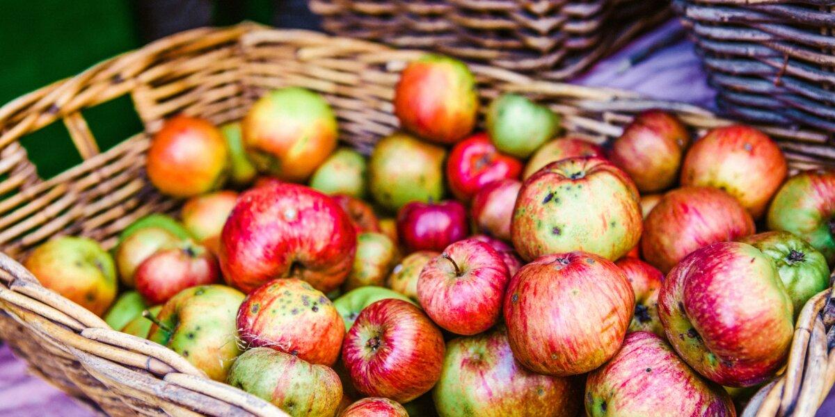 abundance-apples-basket-1047444