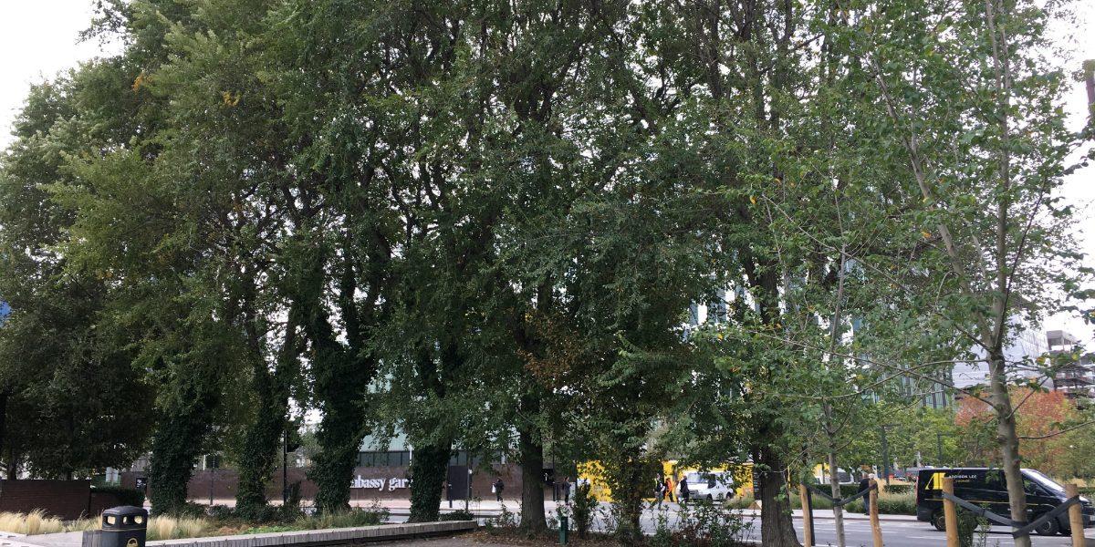 Elm trees on Nine Elms Lane_1200px