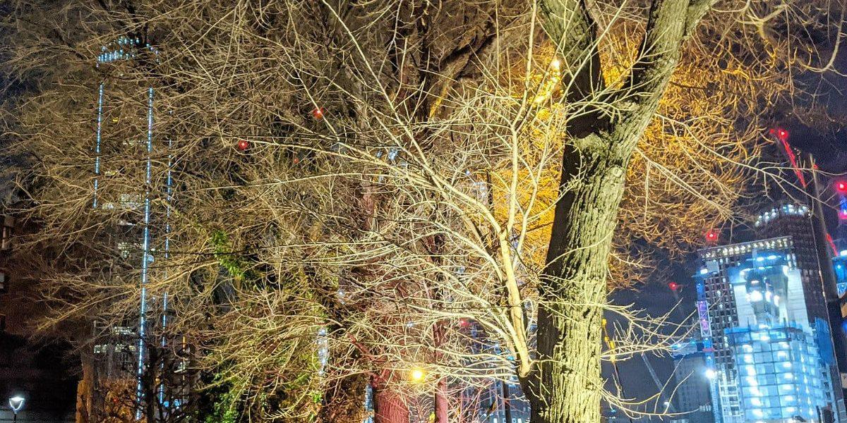 the nine elm trees_TK_1200px