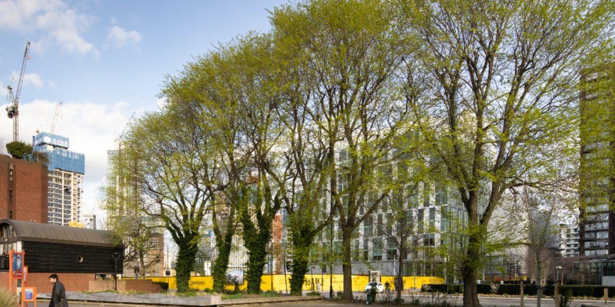 Nine elm trees_Mickey Lee_1200px